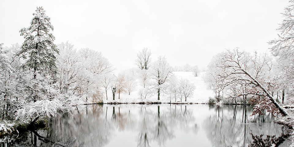 Beautiful Winter Photo