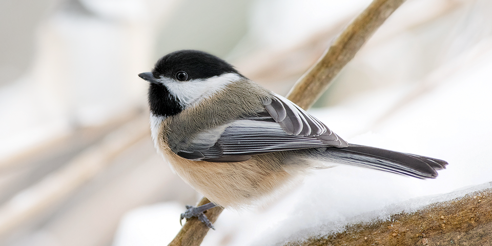 Picture of a bird to celebrate beautiful winter