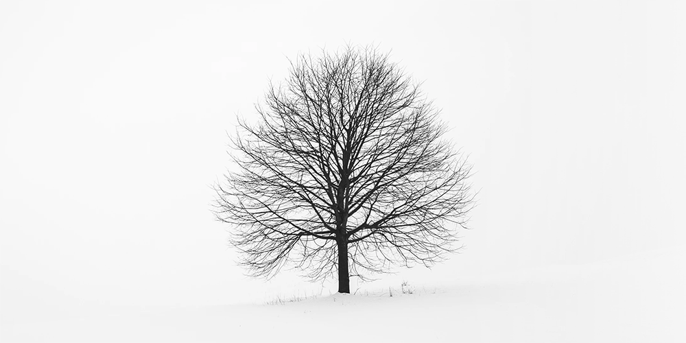 Illustration of a lonely winter tree